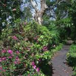 Parque de las Siete Fuentes en las Azores