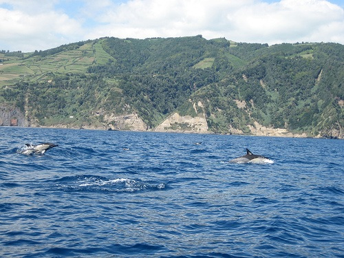 Delfines en las Azores