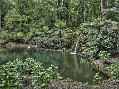Bosque de Buçaco